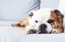 Top 8 des comptes Instagram d'animaux