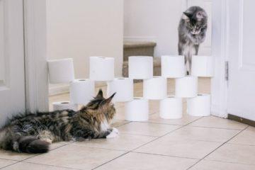 Toilet paper challenge sur Instagram
