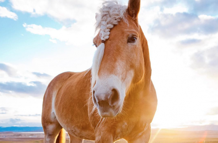 BigSkyBandit, les chevaux