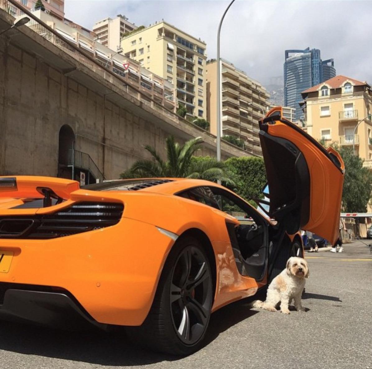 RichDogsOfIG, les chiens les plus riches sur Instagram