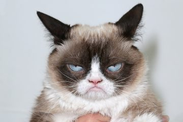 #CatsAgainstBrexit Influenth