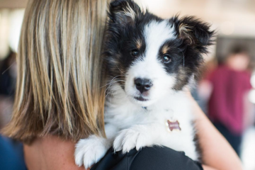 TheDogist, les photos qui célébrent la beauté des chiens
