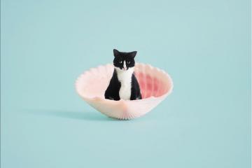 PrincessCheeto, la chatte la plus cool d'Internet