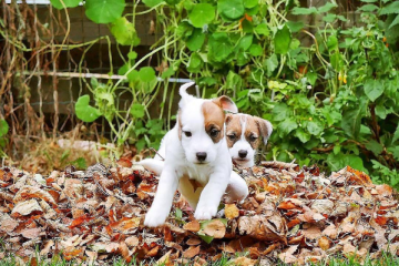 PuppiesForAll, votre dose de cuteness du lundi