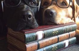 DogBookClub, la mignonnerie du lundi