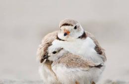 AudubonSociety, les oiseaux extravagants