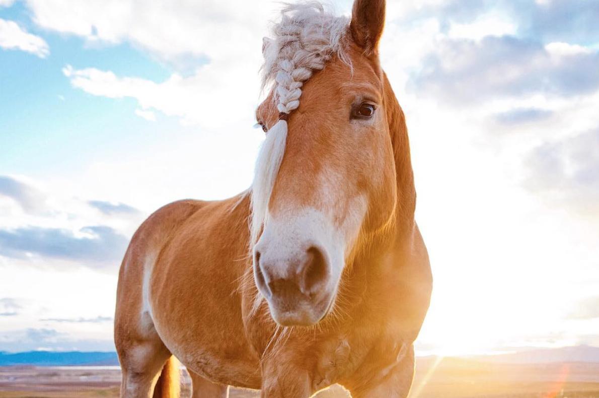 instagram bigskybandits les magnifiques clich s de chevaux influenth. Black Bedroom Furniture Sets. Home Design Ideas