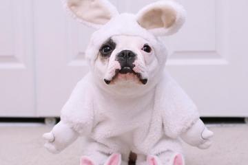 DogsOfInstagram, le compte des passionnés de chiens