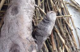 ThatLooksLikeADick, les objets ressemblant à des pénis