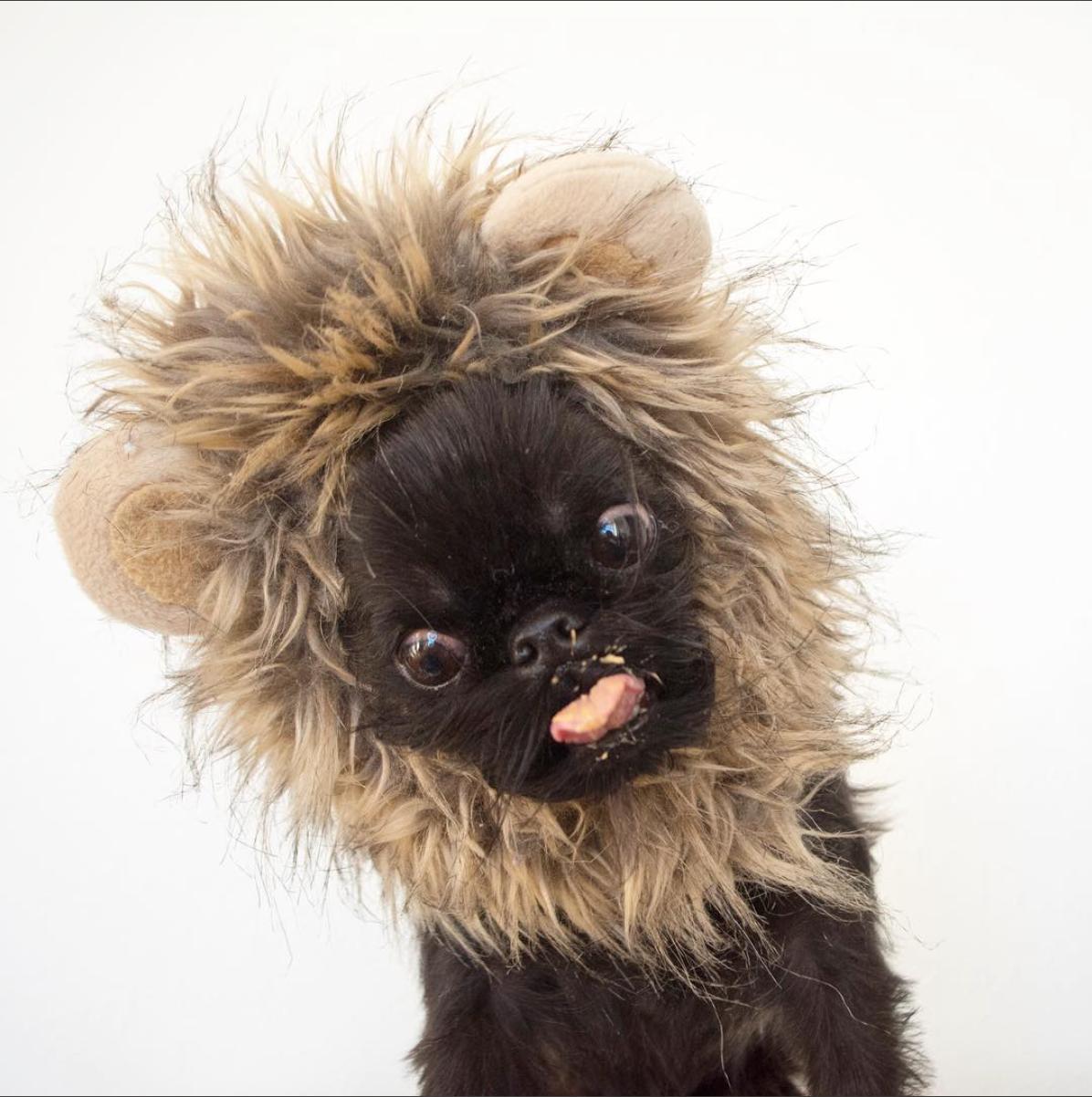 DigbyVanWinkle, les chiens les plus cools des Internets