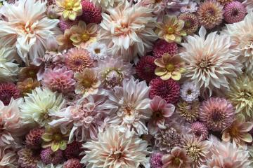 FloretFlower, la passion des fleurs