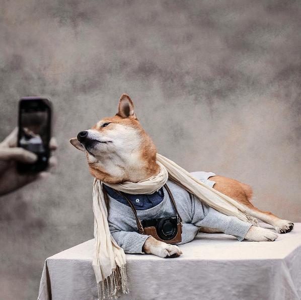 MeanswearDog, le chien semblable à un modèle homme